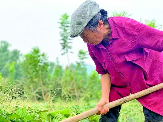 老母亲为完成女儿遗愿 扎根山野打造万亩公益林